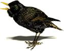 OBM   Vogels bestrijden vogelbestrijding   Plaagdieren